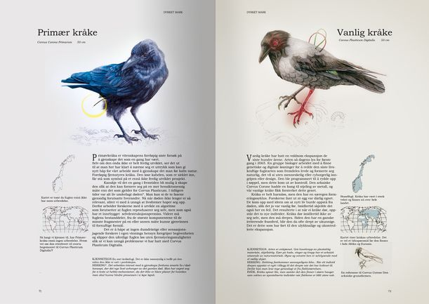 Corvus aapen bok-for-web